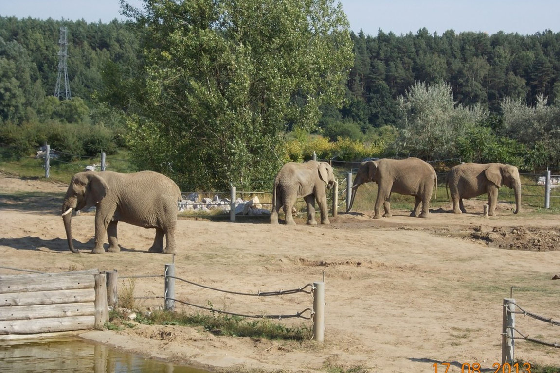 stare zoo 45